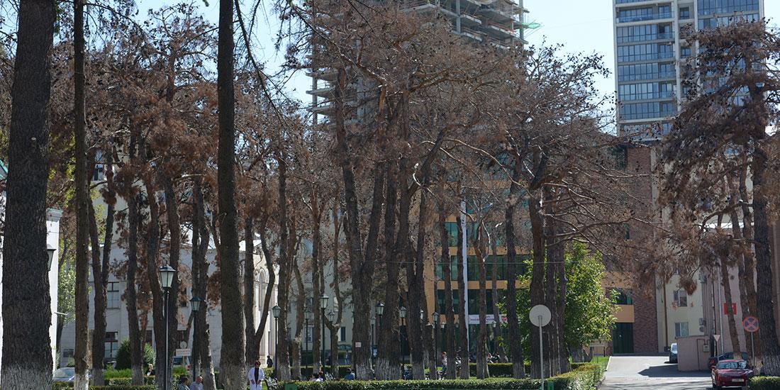 """""""ავერსი"""" მერიასთან ერთად დაავადებული ხეების ახალი ნერგებით ჩანაცვლებას აანონსებს"""