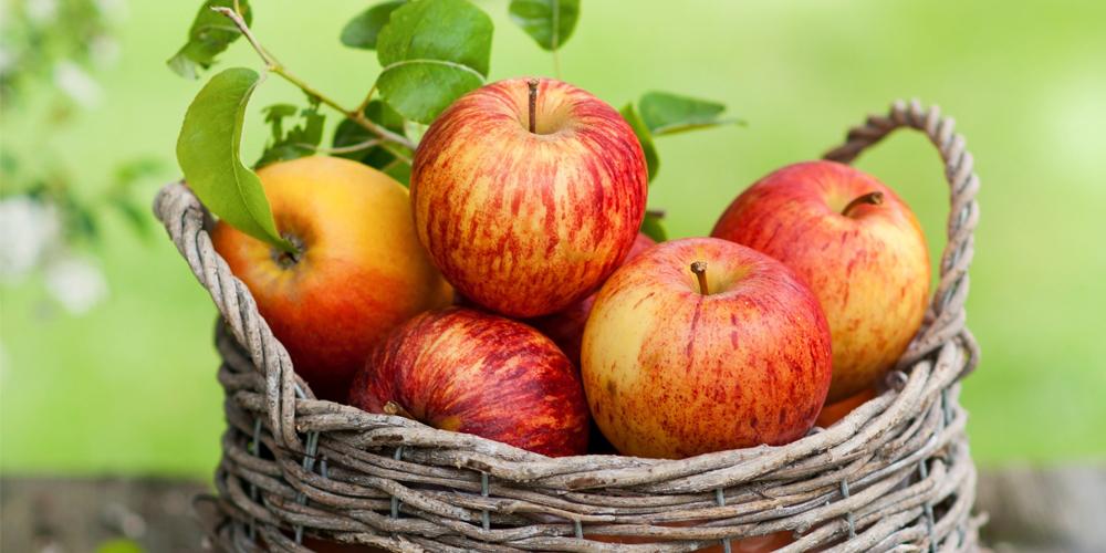 ვაშლის სასარგებლო  თვისებები